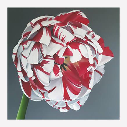 Carnival de Nice Tulip