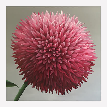 Misty Purple chrysanthemum